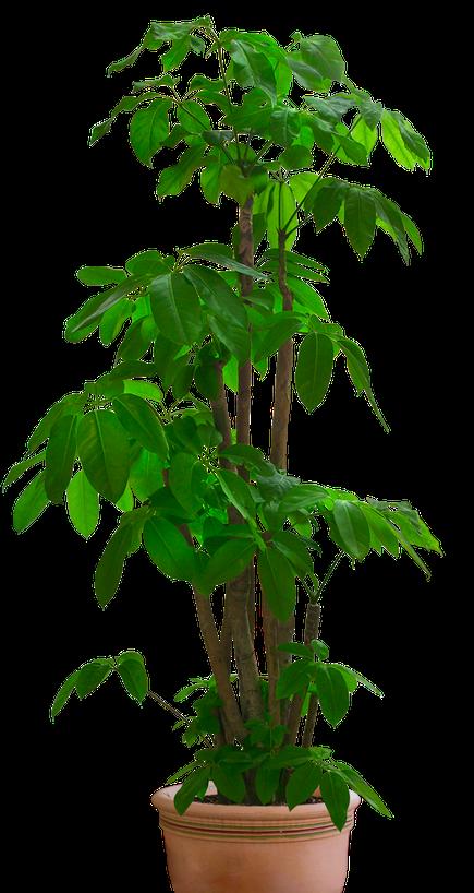 Plant - Bloemencenter Poelkapelle